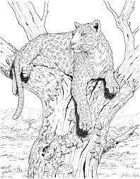 Brilliant Leopard Coloring Pages