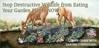 keep deer out of garden off 74