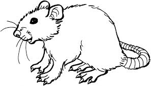 Small Picture Rat Coloring Pages GetColoringPagescom