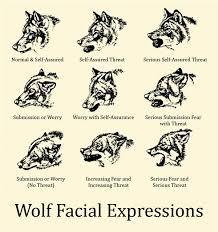 Wolf Body Language Chart Wolf Body Language Chart Www Bedowntowndaytona Com