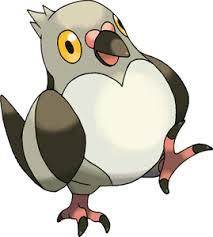 Pokemon 2519 Shiny Pidove Pokedex Evolution Moves