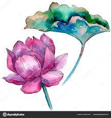 розовый лотос цветок ботанический цветочные цветок изолированных