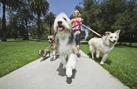 Pet Sitter Resume Description Chron Com