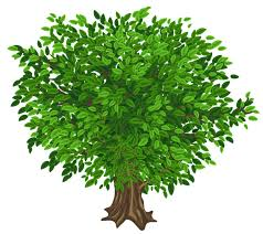 Green Tree  PNG  Clipart