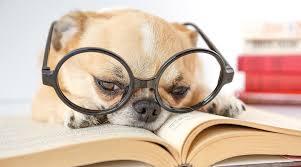 Image result for dog reading books images