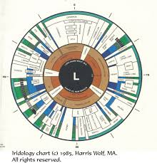 Iridology Left Eye Iridology Chart How To Stay Healthy