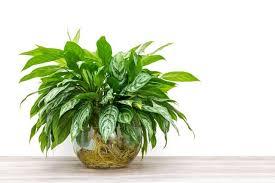 Piante verdi da appartamento foto benessere leonardo it piante da appartamento e giardino immagini greenstyle oltre 25 fantastiche idee su. Piante Da Interno Poca Luce Le Piu Resistenti E Facili Da Curare