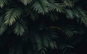 oc25-summer-tree-leaf-vacation-green-nature