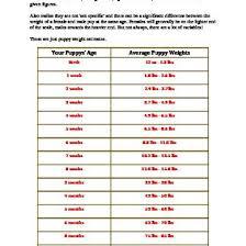 Rottweiler Puppy Growth Chart Your Rottweiler Puppy Growth Chart 3no7q3g22eld