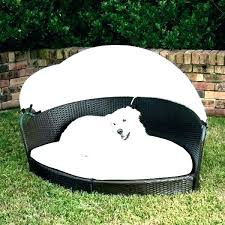 Dog Outdoor Bed Outdoor Dog Bed Amazon – tipps-zum-abnehmen.info