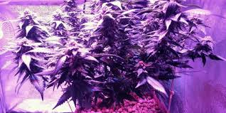 Led Light Distance Chart 10 Best Led Grow Lights For Weed In 2019 Comparison