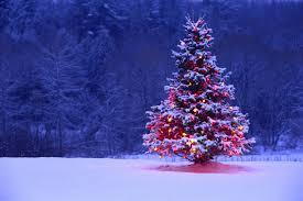 Αποτέλεσμα εικόνας για Weihnachtsbaum