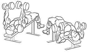 Image result for dumbbell bench press