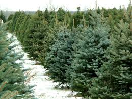 Where To Buy Christmas Tree  Life Coach  For More Clarity About When Should You Buy A Christmas Tree