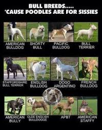 Types Of Pitbulls Chart Bully Breeds Chart Google Search Dog Breeds Dogs Bully Dog