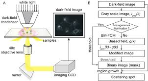 dark field microscopy figure 1 a setup of the dark field microscope the light that