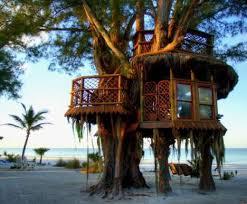 Imagini pentru locuinta in copac