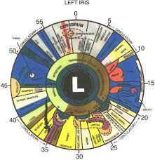 What Is Iridology Chart Iridology Eye Chart The Above Is An Iridology Chart Or Map