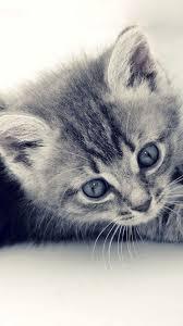 Cute Cat iPhone Wallpapers - Top Free ...