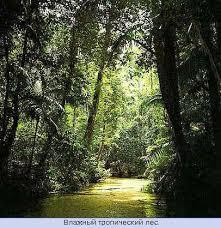 География материка Австралия карта Австралии Географическое  Влажный тропический лес Австралии