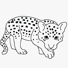 Snow Leopard Coloring Pages Awesome Leopard Print Coloring Pages