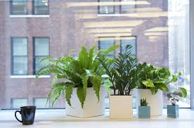 Office pot plants Photoshop Cut Out Design Tip More Is Definitely Merrier When It Comes To Office Plants Gardenista Ask The Expert 10 Tips For Office Plants From The Sill Gardenista