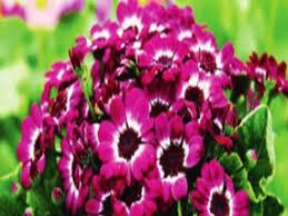 Assamese Flower Chart Six Easy Maintenance Plants You Can Grow In Winter Times