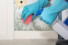 Schimmel Dauerhaft Im Haus Entfernen Hilfreiche Tipps Und Methoden