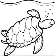 Cute Sea Turtle Coloring Page With Sea Turtle Coloring Pages Cute