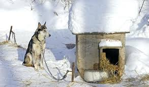 winter dog kennel best dog house for winter outdoor winter dog kennel