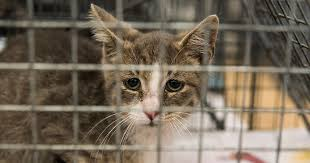 cats in animal shelters. Wonderful Shelters Inside Cats In Animal Shelters N