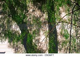 Image result for tree trunk shadows