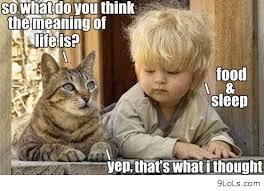 Funny Christmas Cat Memes via Relatably.com
