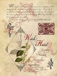 scarletsuniquegifts  Aromatherapy Herbs