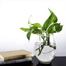 free shipping Transparent glass vase Other hydroponics vase contracted  aquatic plants large container vessels