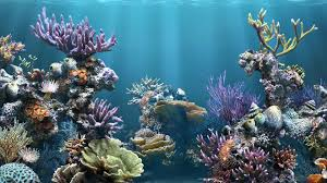 Cool Gallery of Fish Tank Backgrounds: 1920x1080 px - HD Wallpapers