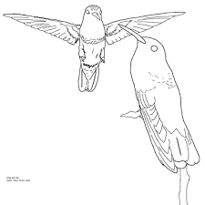 Small Picture Berylline Hummingbird Coloring Page