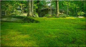 Image result for moss landscaping ideas