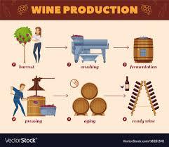 Flow Chart Cartoon Wine Production Process Cartoon Flowchart