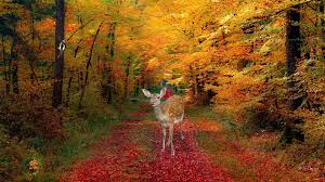 fall nature backgrounds with deer. Deer In Autumn Desktop Background Wallpapers HD Free 581561 To Fall Nature Backgrounds With