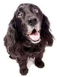 Top 10 Best Senior Dog Foods for 2021 | <b>Dog Food</b> Advisor