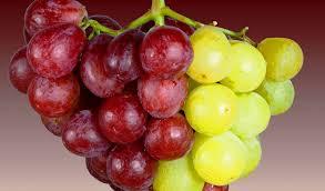 תוצאת תמונה עבור פירות מהפרי