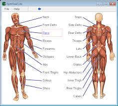Muscle Exercise Exercise Muscle Groups Chart