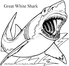 Small Picture Great White Shark Coloring Page Snakes N Scales