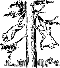 Small Picture ANIMALS OUTLINE TREE CARTOON FLYING SQUIRREL Public Domain