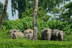 Asian elephant conservation act