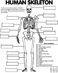 Small Picture Free Printable Cheat Sheets Human skeleton Human body unit and