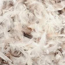 duck feather filling the cushion