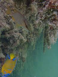 under water life essay essays on life under water essay through