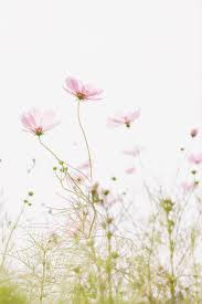 Light Pink Flower Background For Mobile ...